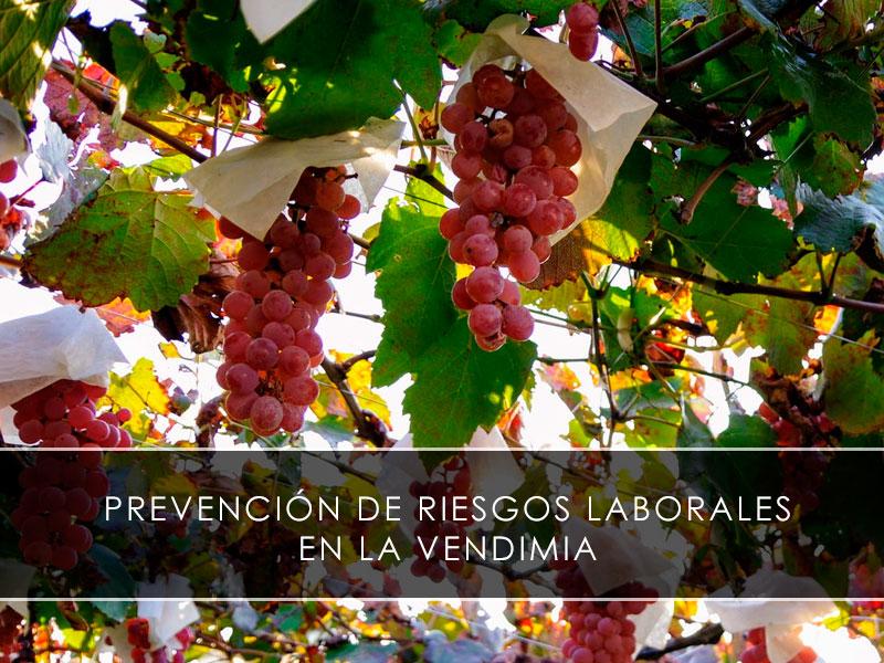 Prevención de Riesgos Laborales en la vendimia