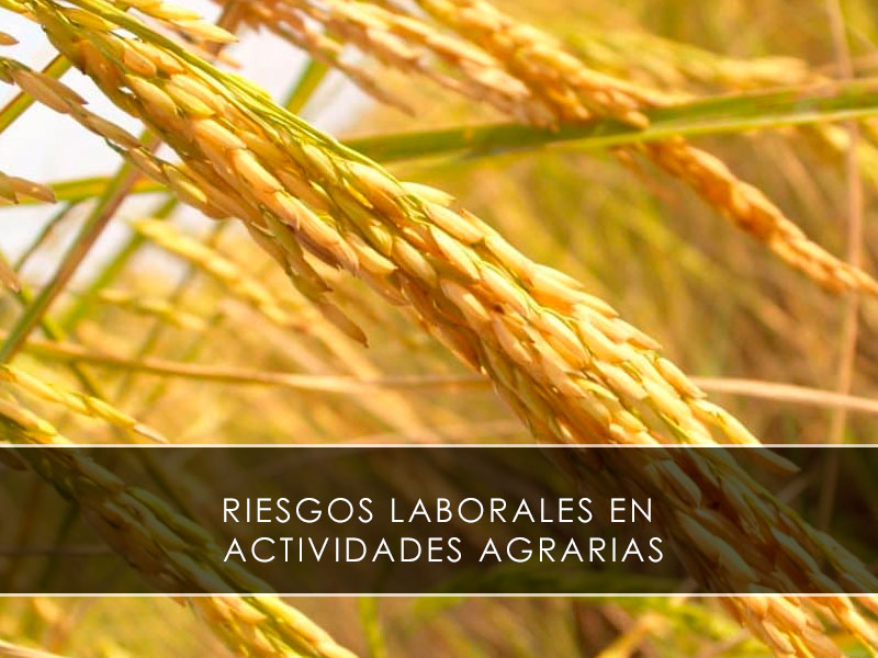 riesgos laborales en actividades agrarias