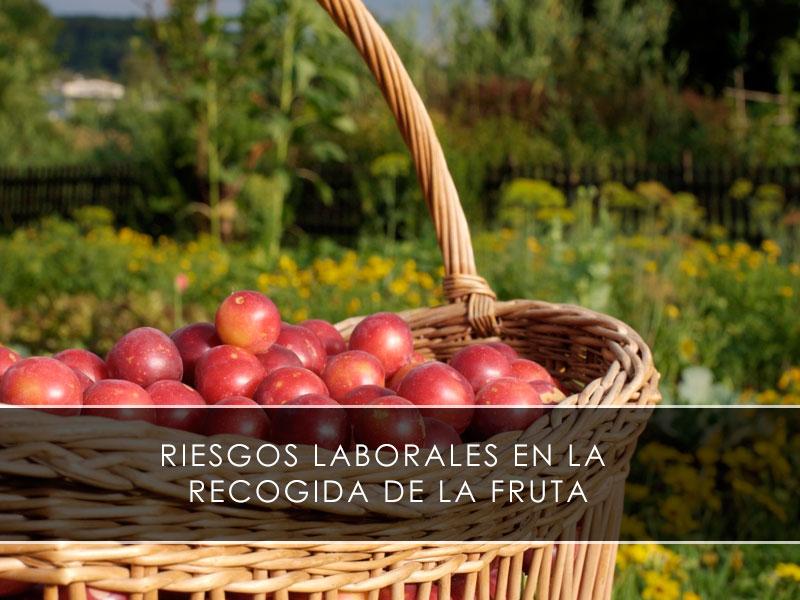 Riesgos laborales en la recogida de la fruta